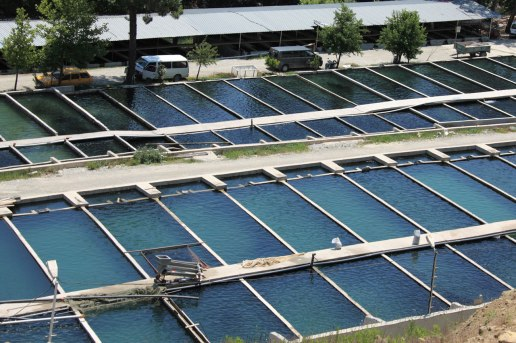 fish_farm_site