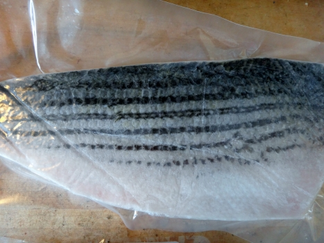 Love The Wild Striped Bass by Pacifico