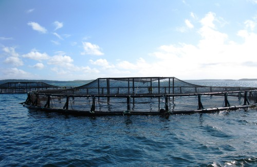 Salmon Sea Cage