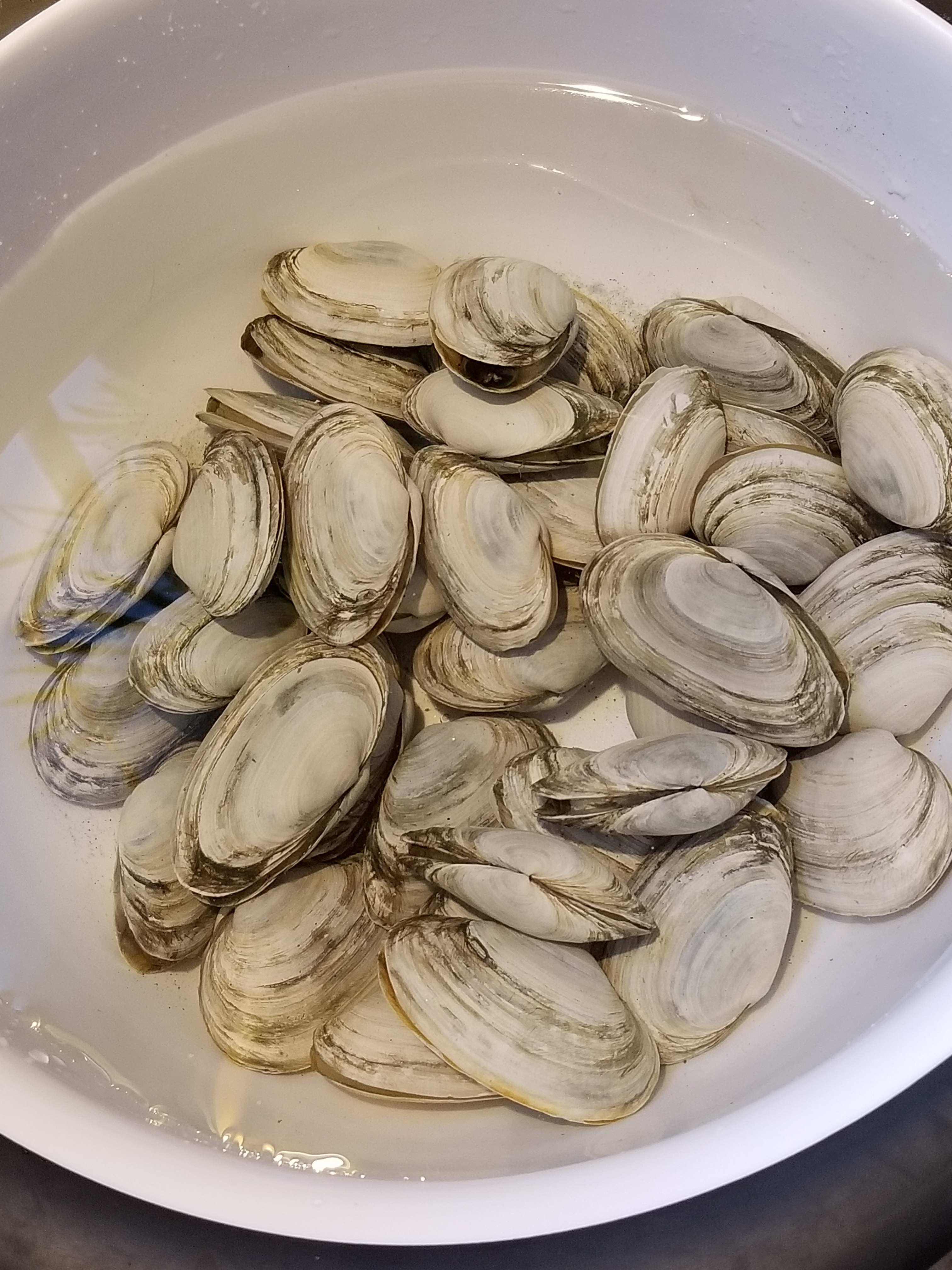 purging clams